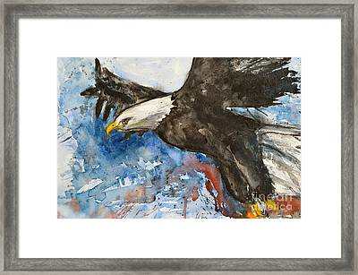 Eagle In Flight Framed Print by Ismeta Gruenwald