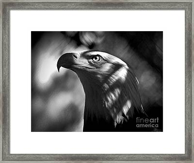 Eagle In Shadows Framed Print by Robert Frederick