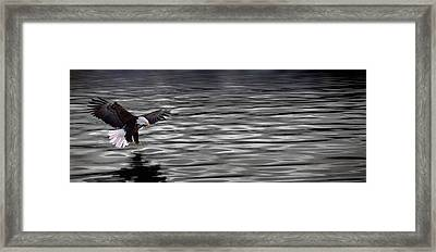 Eagle Over Water Framed Print by Panoramic Images