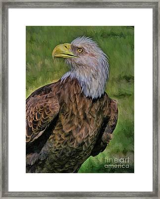 Eagle Portrait Oil Framed Print by Deborah Benoit