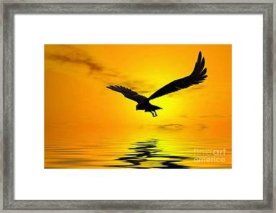 Eagle Sunset Framed Print by John Edwards