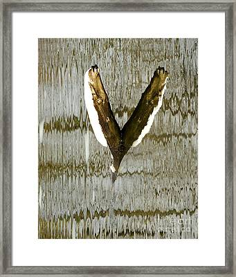 Eagle Wings Framed Print by Marcia Lee Jones