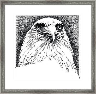 Eagle With Tear Framed Print by John D Benson