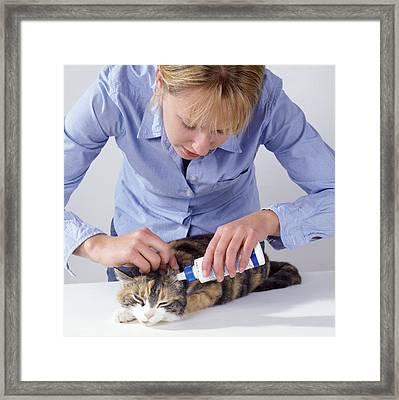 Ear Drops For Cat Framed Print by John Daniels
