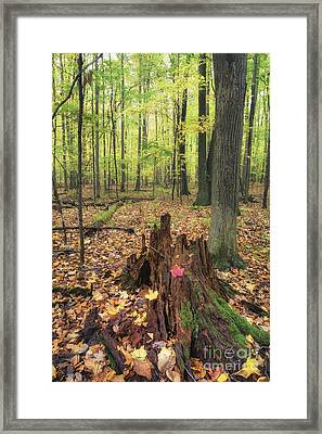 Early Autumn Woods Framed Print by Michele Steffey