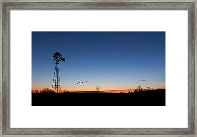 Early Birds Framed Print by Bill Wakeley