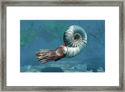 Early Jurassic Ammonite Framed Print by Walter Myers