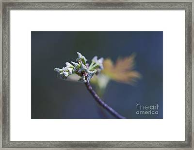 Early Morning Kiss Framed Print by Maria Ismanah Schulze-Vorberg
