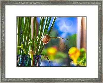 Early Morning Magic Framed Print by Omaste Witkowski
