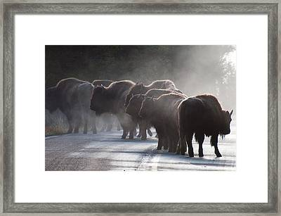 Early Morning Road Bison Framed Print by Bruce Gourley