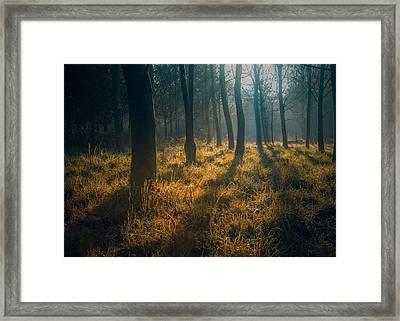 Early Morning Woodland Walk Framed Print by Chris Fletcher