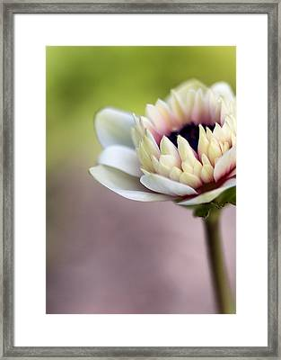 Early Spring  Framed Print by Caitlyn  Grasso