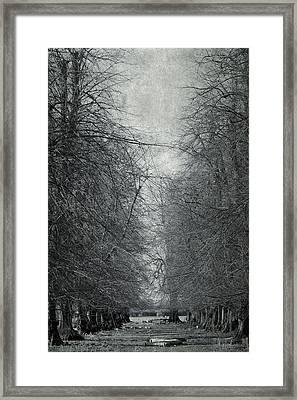 Early Spring Framed Print by Svetlana Sewell