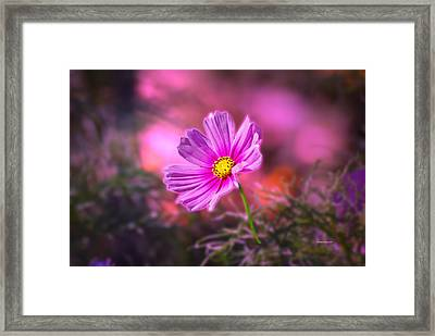 Early Sun Light Framed Print by Thomas Woolworth