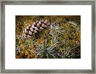 Earth Hour Framed Print by Christina Rollo