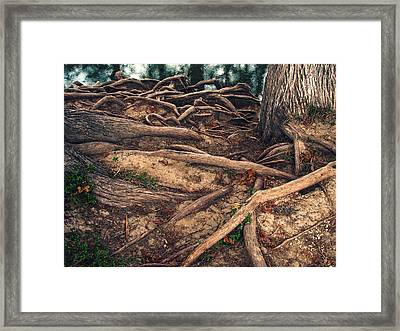 Earthbound Framed Print by Wendy J St Christopher