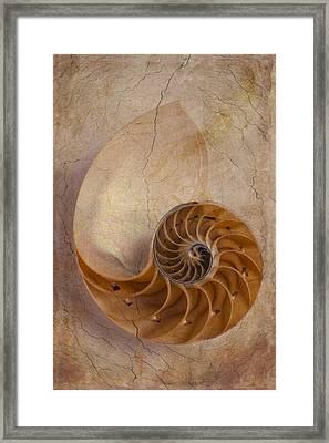 Earthy Nautilus Shell  Framed Print by Garry Gay