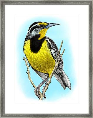 Eastern Meadowlark Framed Print by Roger Hall