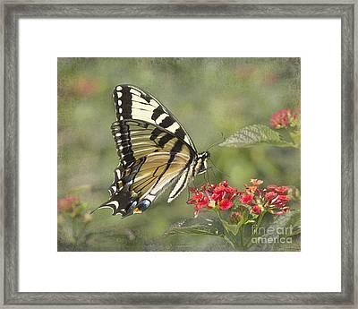 Eastern Tiger Swallowtail Beauty Framed Print by TN Fairey