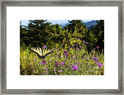 Eastern Tiger Swallowtail Blazing Star Framed Print by Thomas R Fletcher