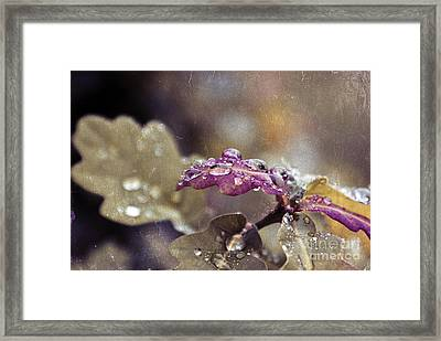 Eau De Vie - S03t03b Framed Print by Variance Collections