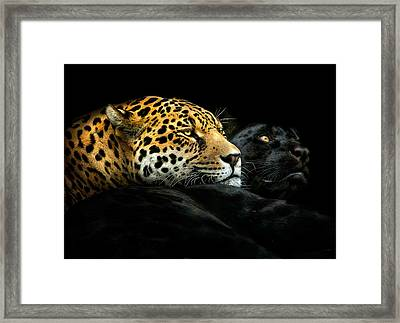 Camouflage Framed Print featuring the photograph Ebony And Ivory by Pedro Jarque