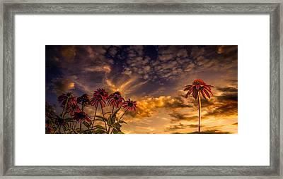 Echinacea Sunset Framed Print by Bob Orsillo