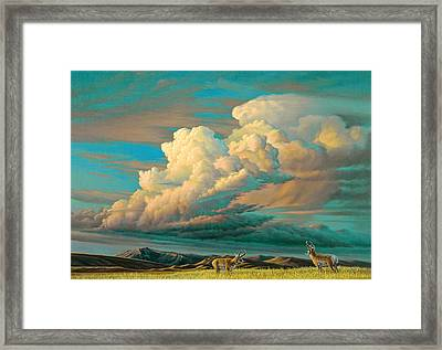 Edge Of The Prairie- Pronghorn Framed Print by Paul Krapf