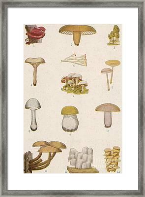 Edible American Mushrooms Framed Print by Science Source