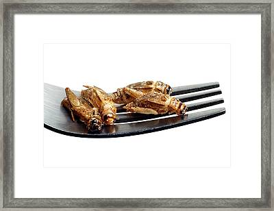 Edible Insects Framed Print by Victor De Schwanberg