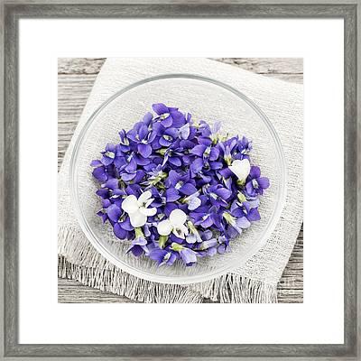 Edible Violets  Framed Print by Elena Elisseeva