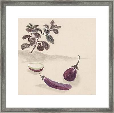 Eggplants Framed Print by Aged Pixel
