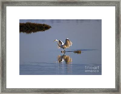 Egret Reflections Framed Print by Mike  Dawson