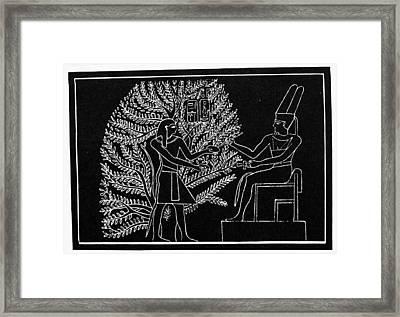 Egyptian Persea Tree Framed Print by Granger
