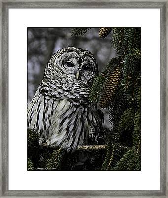 Eight Hoots From The Pine Cone Perch Framed Print by LeeAnn McLaneGoetz McLaneGoetzStudioLLCcom