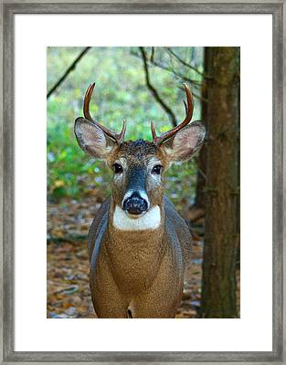 Eight Point Face To Face Framed Print by Michael Peychich