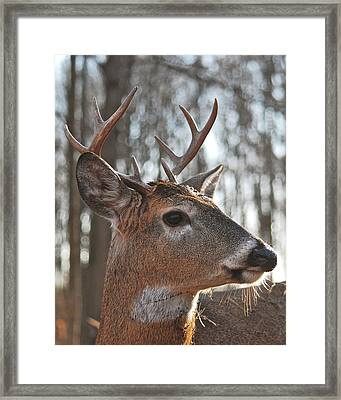 Eight Point Up Close 1100 Framed Print by Michael Peychich