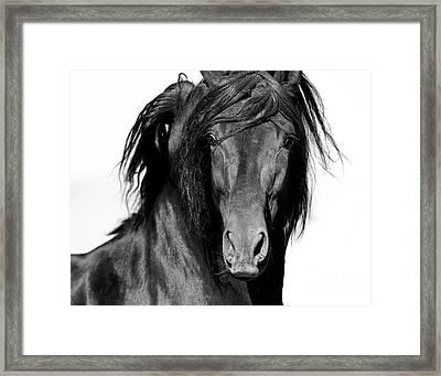El Caballo Negro Framed Print by Carol Walker