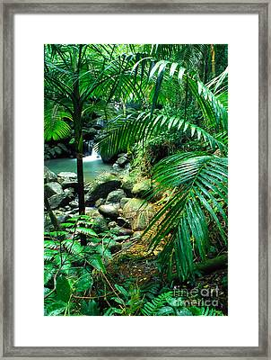 El Yunque Palm Trees And Waterfall Framed Print by Thomas R Fletcher