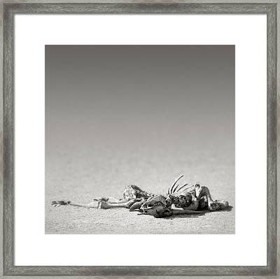 Eland Skeleton In Desert Framed Print by Johan Swanepoel