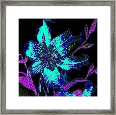 Electric Blue Stargazer Framed Print by Laura Wilson