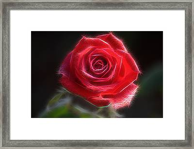 Electric Rose Framed Print by Ronald T Williams