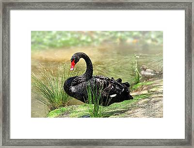 Elegance In Black Framed Print by Kaye Menner