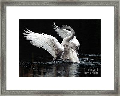 Elegance In Motion 2 Framed Print by Sharon Talson