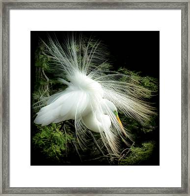 Elegance Of Creation Framed Print by Karen Wiles