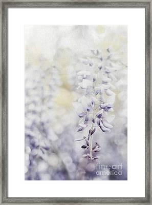 Elegant Wisteria Framed Print by Darren Fisher
