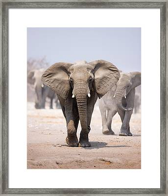 Elephant Bathing Framed Print by Johan Swanepoel