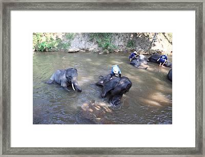 Elephant Baths - Maesa Elephant Camp - Chiang Mai Thailand - 011318 Framed Print by DC Photographer