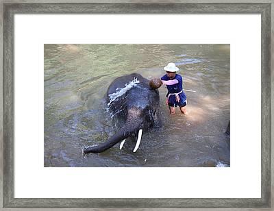 Elephant Baths - Maesa Elephant Camp - Chiang Mai Thailand - 011324 Framed Print by DC Photographer