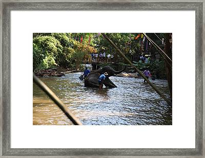 Elephant Baths - Maesa Elephant Camp - Chiang Mai Thailand - 01138 Framed Print by DC Photographer